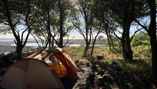 A tent in the trees with the beach in the background