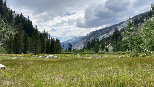 A high alpine meadow